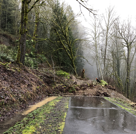 Photo of a landslide covering a trail.