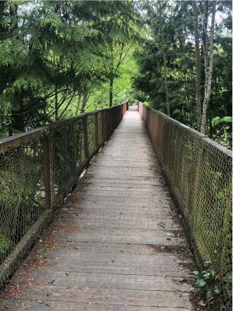 Photo looking down the wooden bridge surrounded by trees.