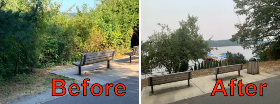 Before and after photos showing the new lake view from the trail.